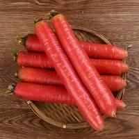 二帅 陕西大荔沙地 水果胡萝卜 10斤