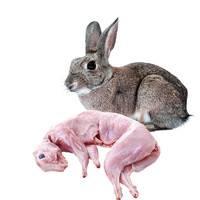 依禾农庄 新鲜兔肉  约1kg/只