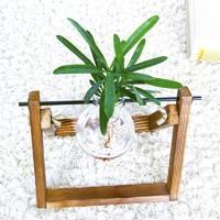 周乡川 水培盆栽 罗汉松 含架含盆