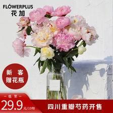 FLOWERPLUS花+ 新品芍药开售 山东大芍药上市 鲜花速递鲜花礼物