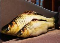 瓜洲牧 鲫鱼抱枕 20cm