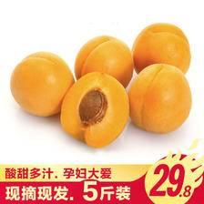 甜甜糯糯 北源壹果 新鲜大黄杏 5斤